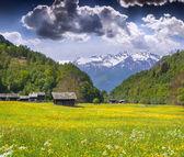 Alpine meadows near the village of Bondo — Stok fotoğraf