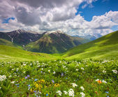 Fields of flowers in the mountains. — Stockfoto