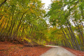 Autumn landscape in the forest with old road — Foto Stock