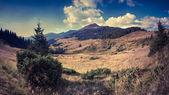 Paysage d'été en montagne — Photo