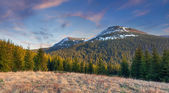 Beautiful spring landscape in the mountains. — Stock Photo