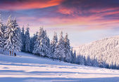 Morning with snow covered trees. — Stock Photo