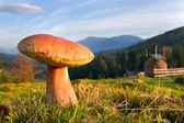 Fungi growing in the Carpathian mountains — Stock Photo