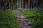 Path in a dark forest in spring — Stockfoto