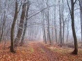Trail in autumn forest — Stock Photo