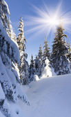 Winter landscape in the forest — Stock Photo