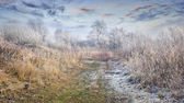 Frosty lanscape in the forest — Stock Photo