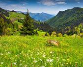 Beautiful summer landscape in the Italian Alps — Stock Photo