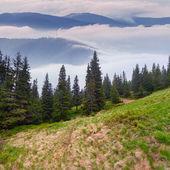 Misty landscape in the Carpathian mountains — Stock Photo