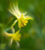 Yellow spring field flowers — Stock Photo