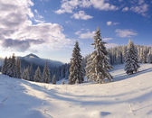 Beautiful winter snow covered trees. — Stock Photo