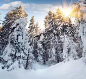 树木覆盖着白雪的群山 — 图库照片