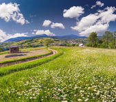 Mountains village with a field of camomiles — Stock Photo