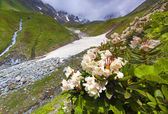 Alpine meadows in the Caucasus mountains — Stock Photo