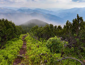 Mystical path in mountains — Stock Photo