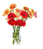 Bouquet of gerberas flowers — Stock Photo