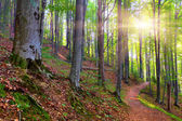 Morning in mystical woods — Stock Photo