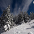Snow-covered fir trees with stars and moon — Stock fotografie