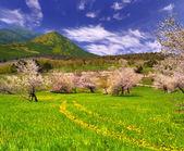 Blossom apple garden in the mountains — Foto de Stock