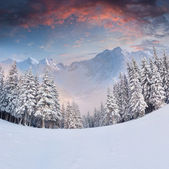 Winter landscape in the mountains. — Stockfoto