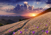 Mountains with field of blossom crocuses — Foto de Stock