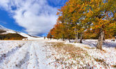 First snow in the forest — Stock Photo