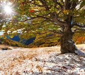 Pierwszy śnieg w lesie — Zdjęcie stockowe
