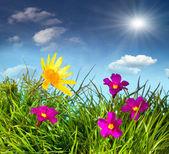 Blooming meadow under blue sky — Zdjęcie stockowe