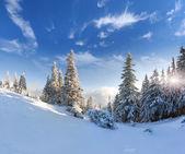 Krajobraz zimy ze śniegiem pokryte drzewami. — Zdjęcie stockowe