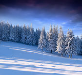Зимний пейзаж в лесу — Стоковое фото