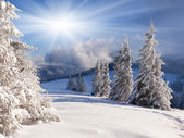 Winter landscape with snow covered trees. — Stockfoto