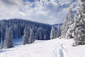 Winter landscape in the mountains — Stockfoto