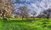 Jardín de manzanos — Foto de Stock