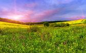 Blossom field in the summer — Zdjęcie stockowe