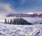 Winter morning in the  mountains — Stock Photo