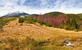 Otoño en las montañas de los cárpatos — Foto de Stock