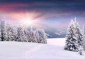 Winter landscape in the mountains. — Stock Photo