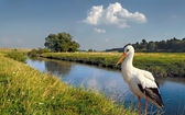 Trusting crane — Stock Photo