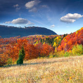 Herbstliche landschaft in den bergen. — Stockfoto