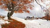 First autumn sudden snow — Stock Photo