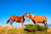 Horses stand against the clear sky — Stock Photo