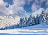 Winter with snow covered trees. — Stock Photo