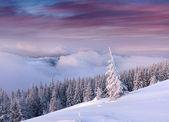 Bäume, die verschneiten in bergen — Stockfoto