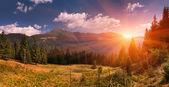 Sommerlandschaft in den bergen — Stockfoto