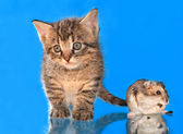 Kitten and a hamster — Stock Photo