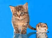 Kitten and a hamster — Zdjęcie stockowe