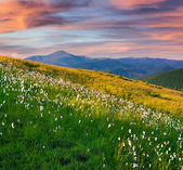 Sunset in the mountains with a feather grass. — Stockfoto