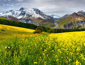 Blooming field of yellow flowers — Stockfoto