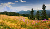 Summer landscape in the Carpathian mountains — Stockfoto