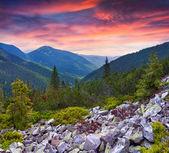 Pôr do sol de verão nas montanhas. — Fotografia Stock
